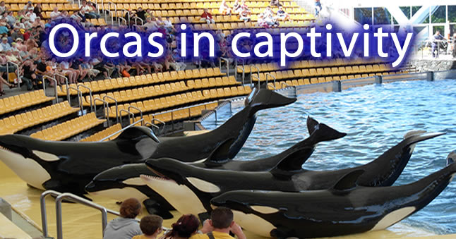 Splashing shame on SeaWorld's Animal Cruelty