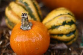 PTO hosts Harvest Festival on October 18th to kick-off the start of Fall