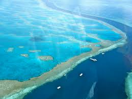 The Great Barrier Reef to die indefinitely