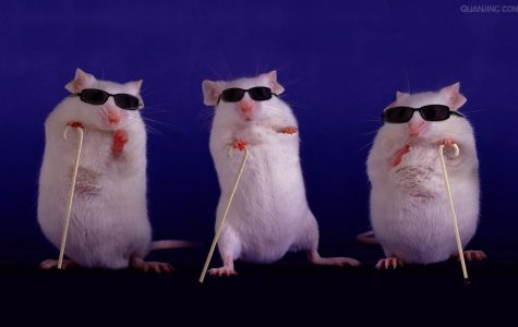 """""""Three Blind Mice"""" rhyme is published"""