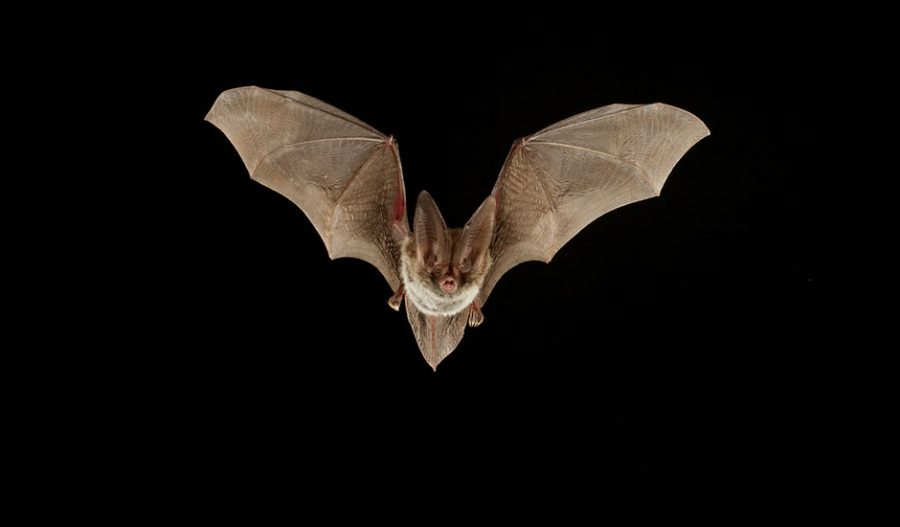 Bats+are+the+only+mammals+that+can+fly