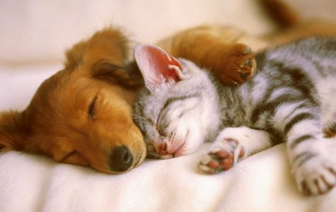 There are 88 million cats in America; as compared to 74 million dogs