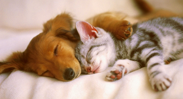 There+are+88+million+cats+in+America%3B+as+compared+to+74+million+dogs