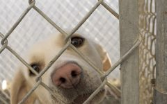 Puppy mills and dog breeders have got to go