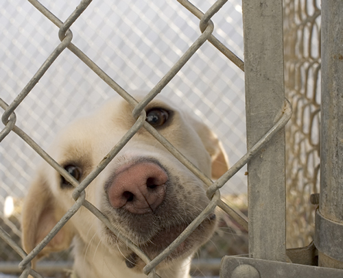 After being found, this dog is shown at the Paws and More No Kill Animal Shelter in Washington, Iowa.