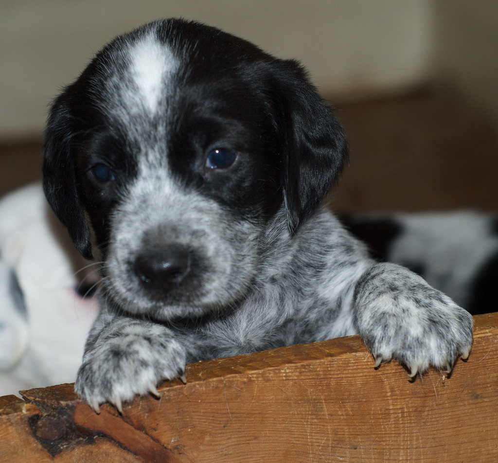 After not finding a loving home, Harmony is a dog from Australian waiting for a home.