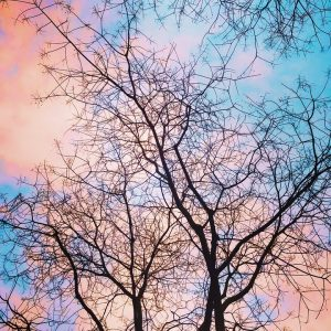 The trees and colorful sky are aesthetically pleasing.