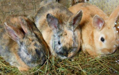 There's an island in Japan you can visit that is filled with only bunnies.