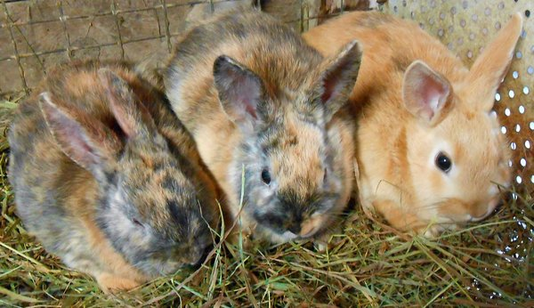 Most of the bunnies on