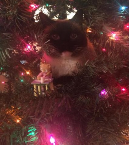 """Happy Holidays !"" Jill the cat, playing hide and seek in festive lights."