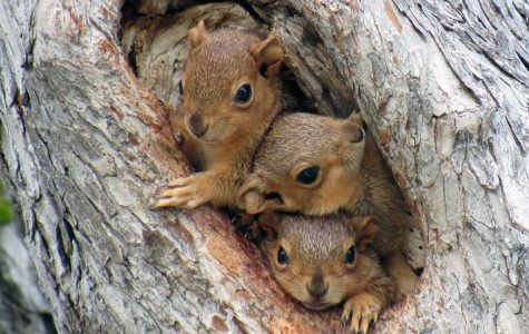 10-20% of US power outages are caused by squirrels.