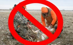 Why hunting is cruel and what you can do about it