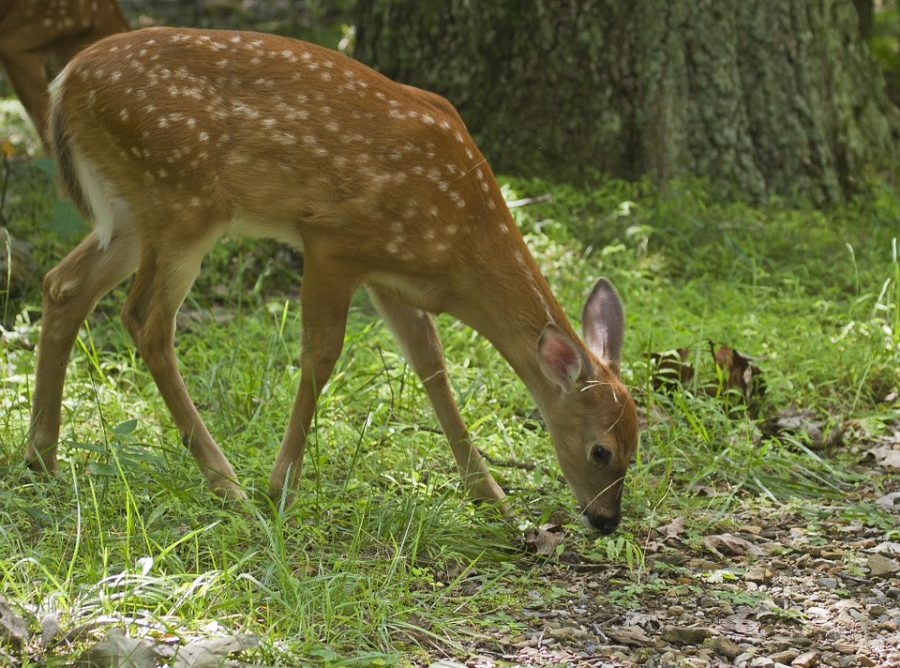 Pros+and+Cons+of+Hunting+in+America