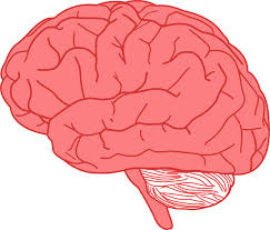 Human brains are one of the most complex organs in the body.