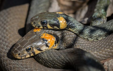 Snakes can help predict earthquakes.