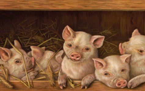Pigs can get sunburn.