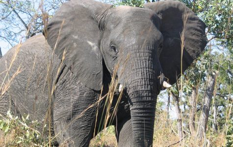 Elephants are the only mammal that cannot jump