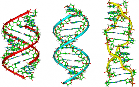 A single human being's DNA contains as much information as fifty novels