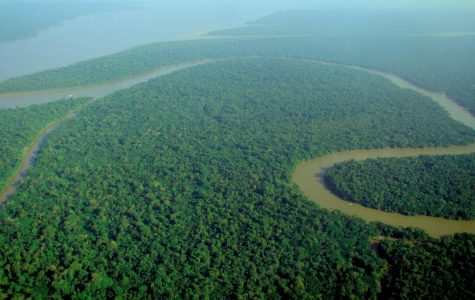 The Amazon Rainforest has been in the process of saving because of all the deforestation