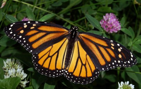 Butterflies have a life span of 12 months