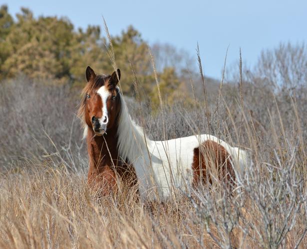 Horses are mammals