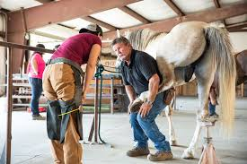 Her accomplishments include farrier skills and equine care.