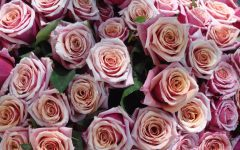 Roses are one of the most common gifts to receive on Valentine's Day. Normally, red roses are the typical gift, however pink and white roses are also given.