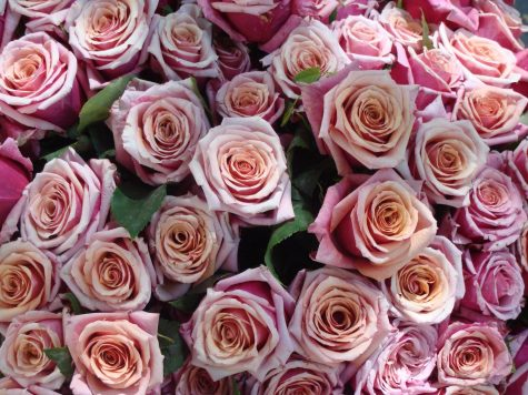Roses are one of the most common gifts to receive on Valentine